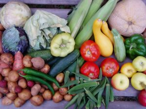 The nutritional resilience approach to food security