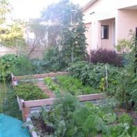 ooooby_garden